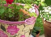 Lilies LILIUM DESIERTO florece cada años.