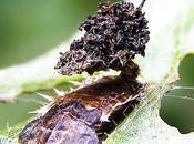 escarabajos defienden mochila heces