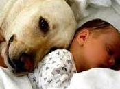 bebés expuestos mascotas tienen menos alergia