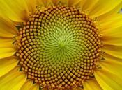 sucesión Fibonacci naturaleza