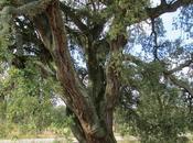 Árboles: sosiego