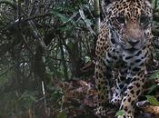 Tierra: jaguar estrella Amazonía Cusco