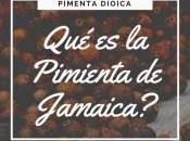 ¿Qué Pimienta Jamaica?