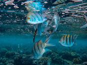 ojos peces permiten profundizar evolución conexión entre cerebro.