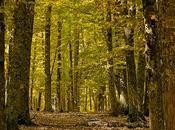 Castañar otoño