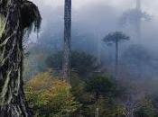 Árboles protegían mapuche,