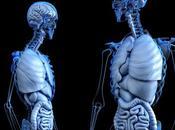 futuro trasplante órganos: ¿Serán base impresión