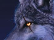 poza lobos