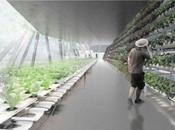 granjas futuro