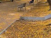 mejor lugar para caminar sobre alfombra amarill...