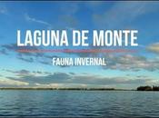 Video: Laguna Monte (fauna invernal)