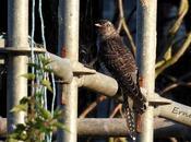 Ejercicio identificación unas aves laredo