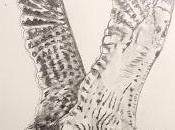 Dibujillos lápiz Numenius phaeopus