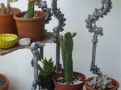 Mucho calor cactus felices