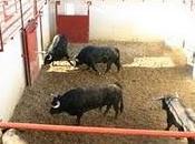 toros julio puerta para próximo viernes, están corrales donceles