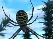 Arañas tigre