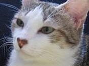 lengua esfinge: gato críptico, cercano...'