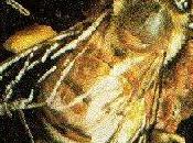 Efectos campo geomagnético insectos sociales