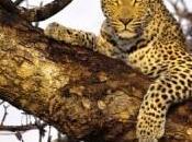 semana Santa safari