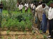 Millones personas África están perdiendo tierras