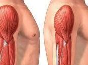 Atrofia muscular denervación