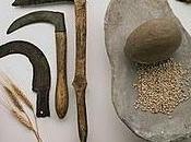 Herramientas agrícolas neolítico