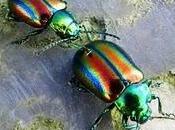 Escarabajos colores