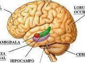 cerebro siempre despierto