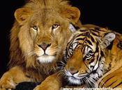 Curiosidades leones
