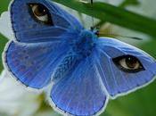 """lepidópteros"" javier serrano"