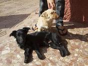 cachorros abandonados. (Córdoba)