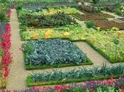 Cultivo Huertas
