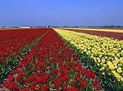Holanda: pasión flores