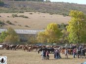 Feria Caballo