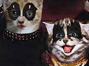 Tapas DISCOS ROCK... ¡Con Gatitos!