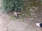 Cachorro galgo cortijo. Pueblo Jaén