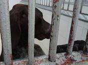 URGENTE!!! NECESITAMOS AYUDA PARA GARA. liberarla cazador!!! S.O.S PERRERA BADAJOZ
