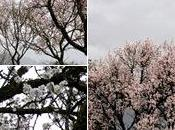 Muchas primaveras