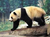 Descubierta especie nueva para fauna aragonesa