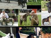 caballos pequeños mundo.