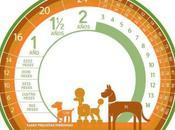 Equivalencia años humanos perros