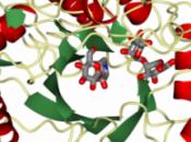 enzima puede generar nuevos tratamientos contra hepatitis