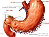Úlceras gástricas, tratamiento