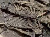 Encuentran esqueletos gigantes