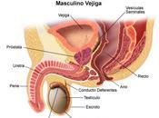 Fármacos pueden retrasar cirugía Próstata