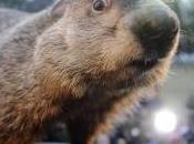 Feliz marmota