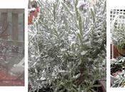 Nieve Menorca