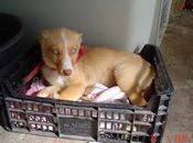 CRISTI. Cachorrita tres meses cruce husky. GPAR