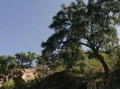 Entidades custodia/ iniciativa ciudadana avanza gestión suelo valor ecológico