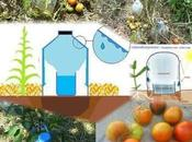 Goteo solar. Agua botellas plástico para regar huerto Basurillas